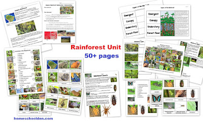 the homeschool den rain forest plants activity. Black Bedroom Furniture Sets. Home Design Ideas