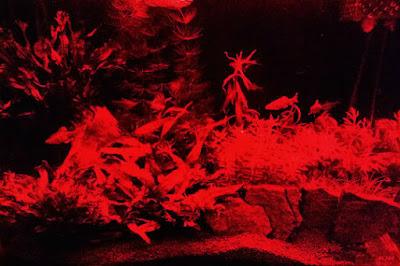 GEXパワーIII赤色LED点灯水景