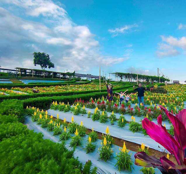 Wisata Agro Taman Suruh Banyuwangi
