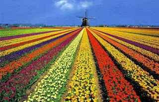 Kebun Keukenhof di Belanda