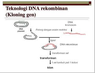 Bioteknologi di bidang farmasi
