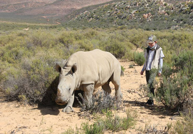 Penelitian South Africa sees decrease in rhino poaching