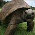 La tortue Jonathan, le plus vieil animal terrestre encore vivant, est âgée de 187 ans