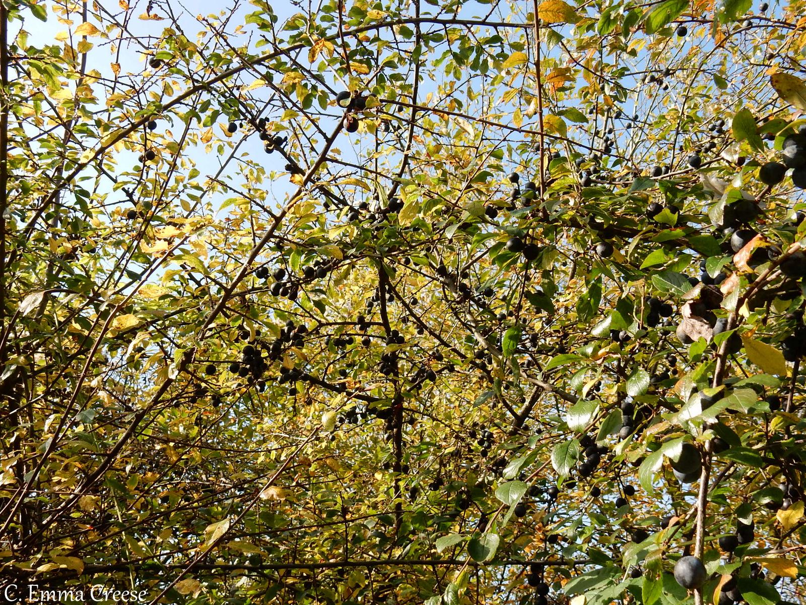 Hampshire rambles Adventures of a London Kiwi