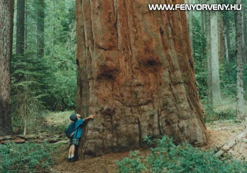 A fák gyógyereje