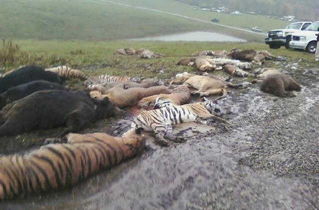 Не для слабонервных! 14 ужасных фото о том, как мы жестоко уничтожаем животных