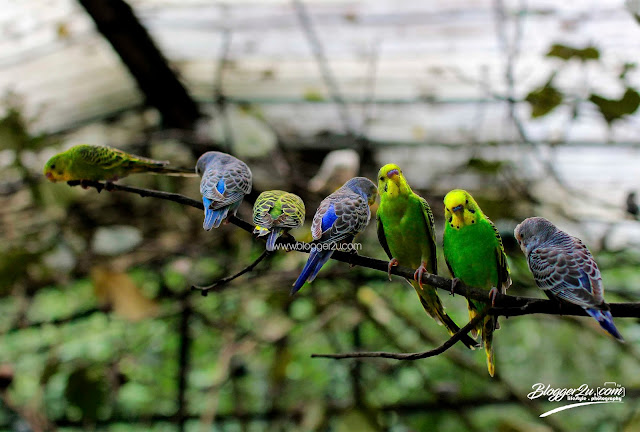 love birds - petting zoo Lost World of Tambun
