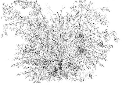 pen sketch nature bush jordan river parkway