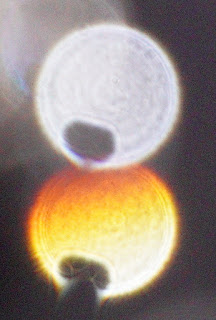 strange orange orb