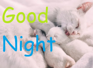 good night images with cat and baby cat