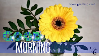 Sparkling-Text Sun-flower-Morning-wishes-HD.jpg