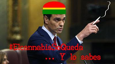 El cannabis se queda y lo sabes