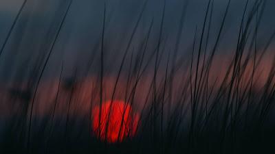 HD Wallpaper Red Sunset Grass