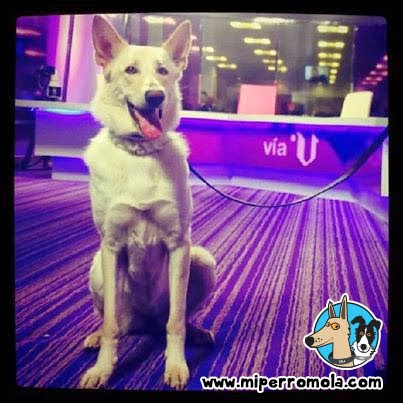 Can de Palleiro en la televisión Vía V