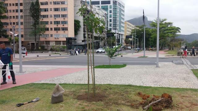 Mudas plantadas pela FPJ no Leblon