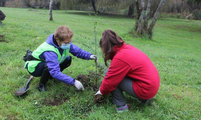Plantan árboles en Parque Chuyaca