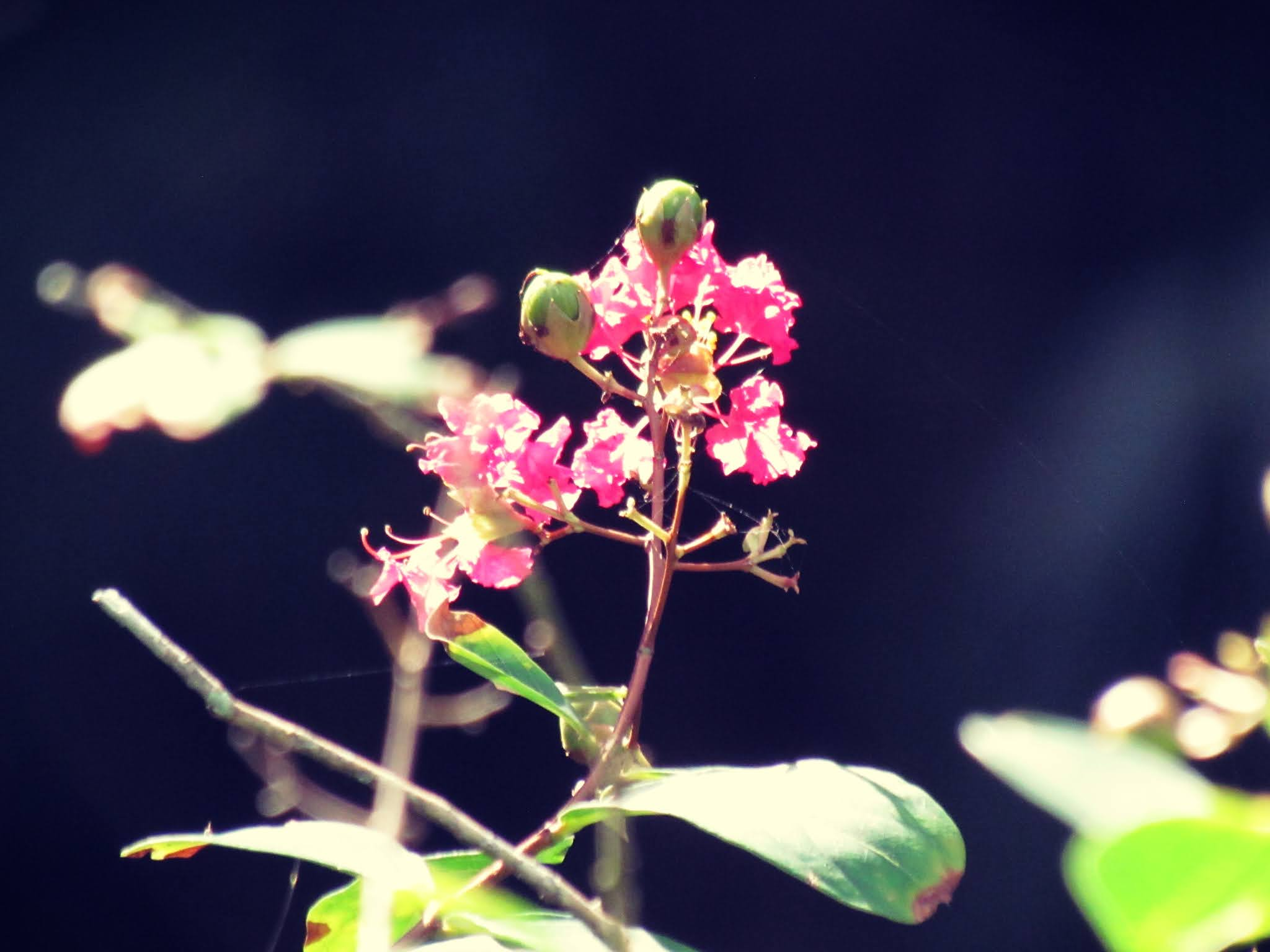 A pink flower bud in summer, black background in a dark fairy forest, and green plant stems and biology of wildlife