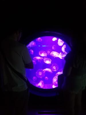 Jovenes observando un acuario de medusas