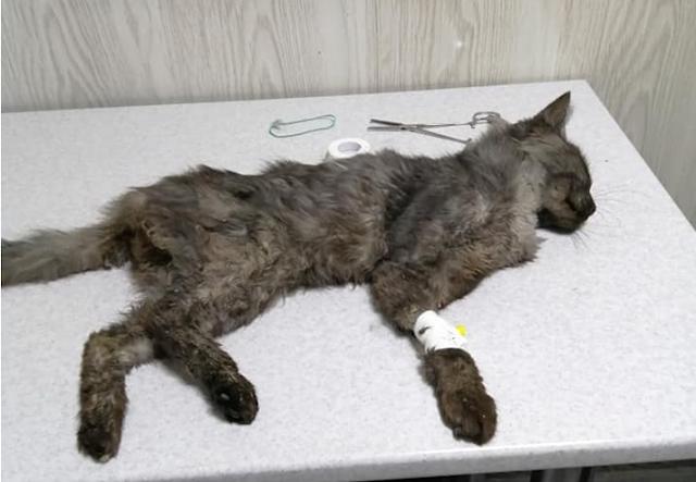 Это ужасно! В Днепре на живом коте тренировались шить нитками