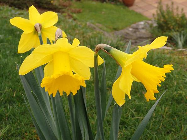 Color en el jard n todo el a o plantas que florecen en febrero - Plantas para el jardin todo el ano ...