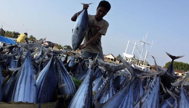 Mantap...!!! Basmi Pencurian Ikan, Kini RI Jadi Eksportir Terbesar ke Jepang