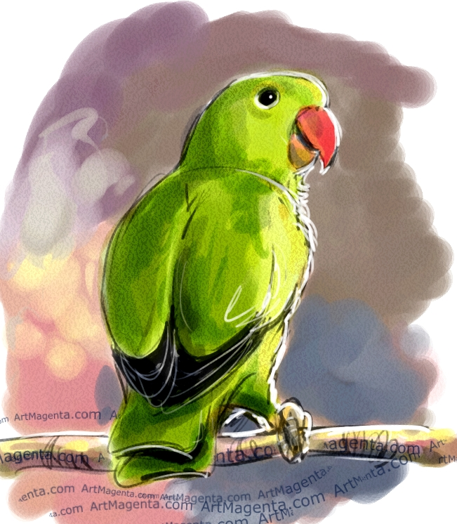 Black-winged Lovebird sketch painting. Bird art drawing by illustrator Artmagenta.
