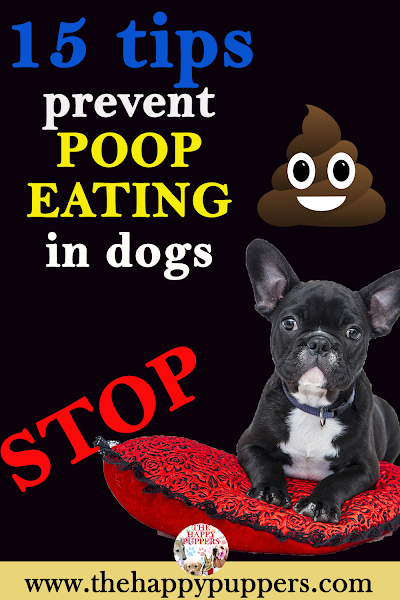15 tips to prevent your dog from eating poop