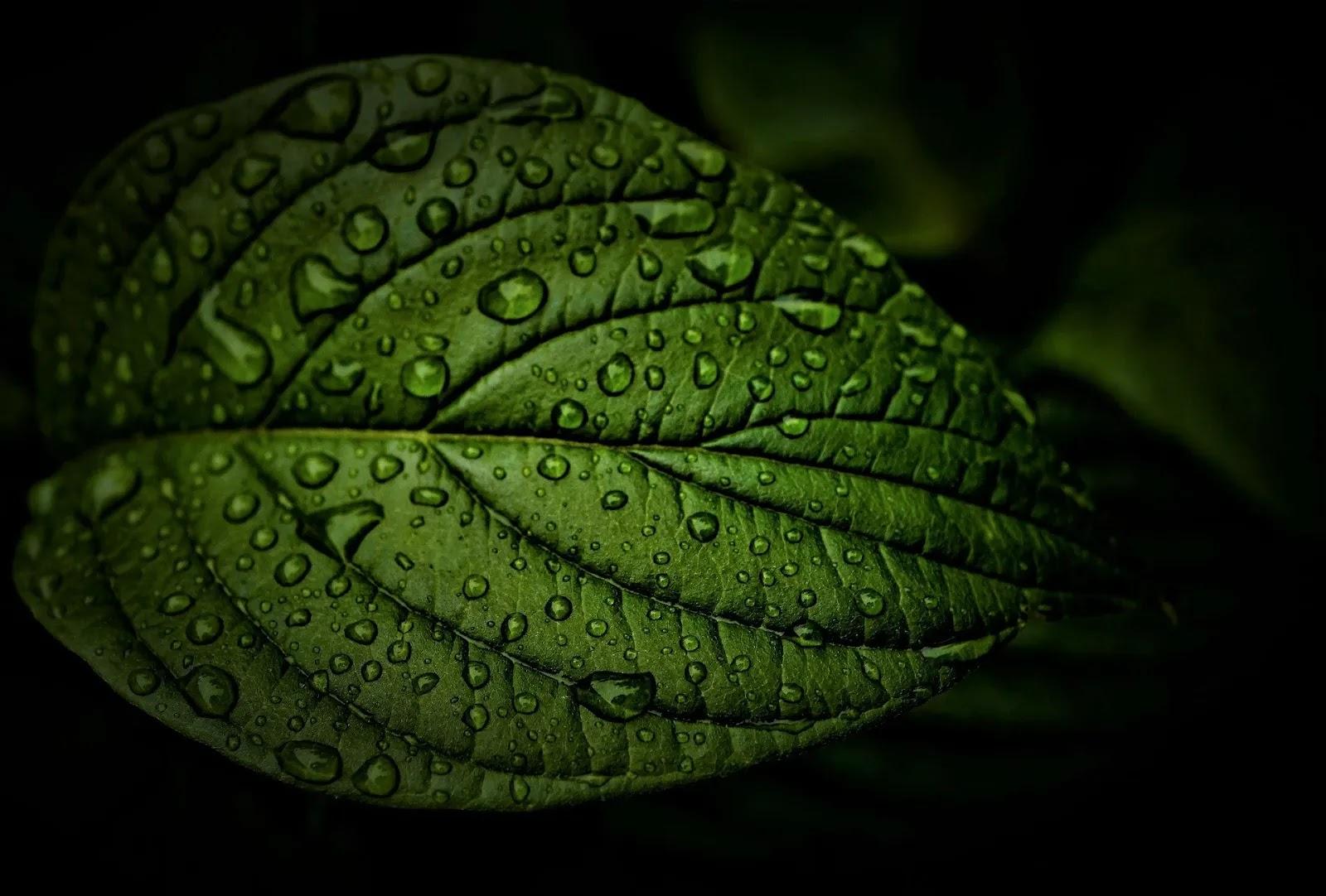 أفضل خلفيات الأشجار الخضراء والطبيعة
