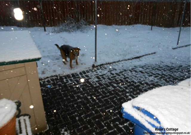"Siberian winds & snow storms, named ""the beast from the east"" by the media, hits the UK - I love how the flash has caught snowflakes and even our furbaby Jade's eyes seem to be glowing magically :)"