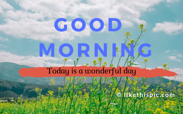 15+ Best Collection of Good Morning Msg Download For Free
