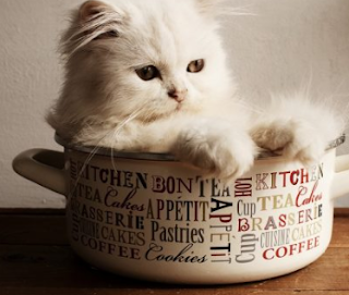 Trik Beli Kucing Persia dan Anggora