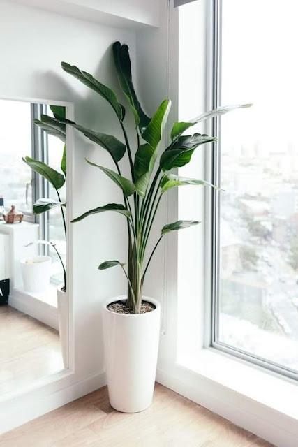 صور جميلة لزرع يصلح لتزيين المنزل به