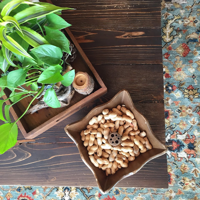 The peanuts provided by the hosts at Toad Haven Cottage- we saw so many squirrels and Bluejays!