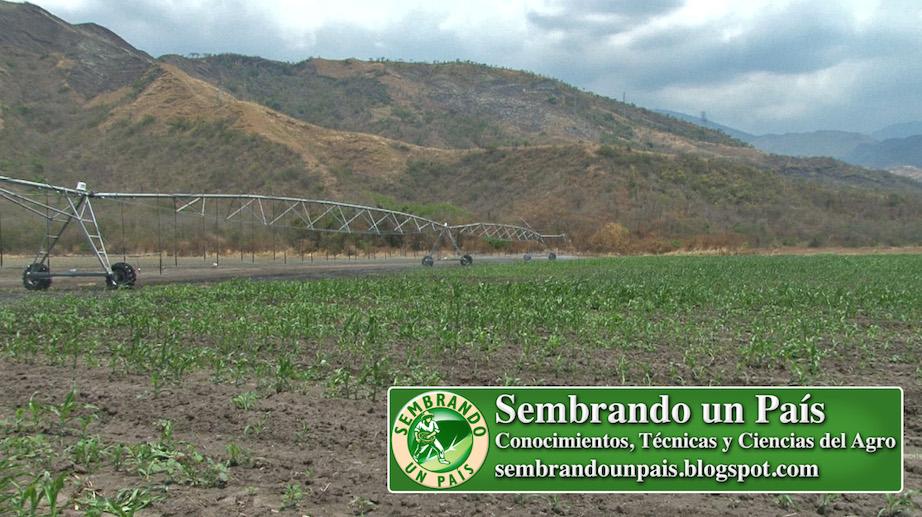sistema de riego por pivote en cultivo de maíz