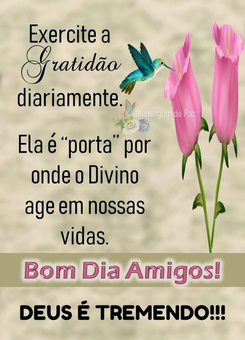 """Exercite a gratidão diariamente.  Ela é """"porta"""" onde o Divino  age em nossas vidas.  Bom Dia Amigos!  DEUS É TREMENDO!!!"""