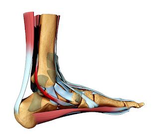 Como é o tratamento da lesão no tendão calcâneo (Aquiles)?