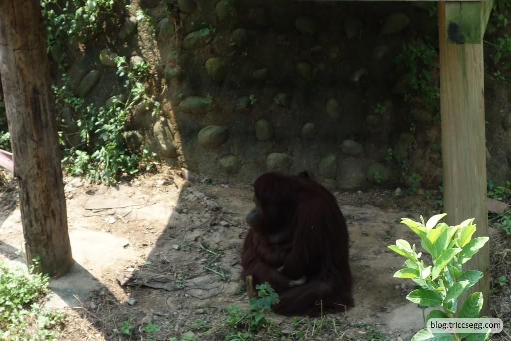 新竹市立動物園(42).JPG