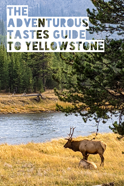 Adventurous Tastes | Guided to Yellowstone text over image of an elk in a field