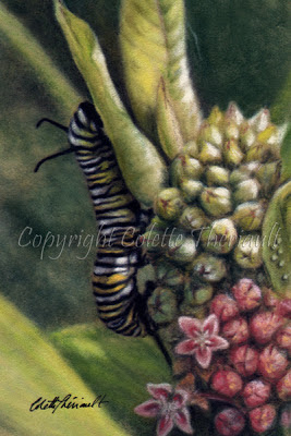 Monarch caterpillar and common milkweed painting in pastel by Colette Theriault