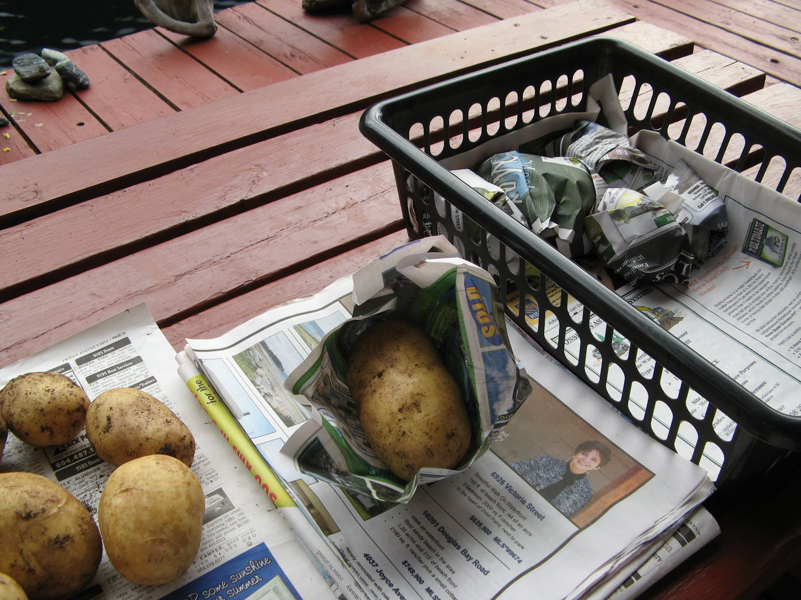 Powell River Books Blog: Preserving: Harvesting and Storing Potatoes
