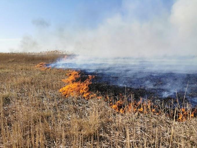 Nagy területen ég a nádas Sármellék területén: a tűzoltók próbálják megfékezni a lángokat