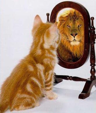 Funny Cat Looking In Mirror Cat Lookin In Mirror