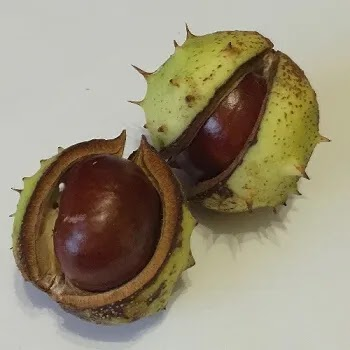 शिंगाडा, Water chestnut fruits name in Marathi