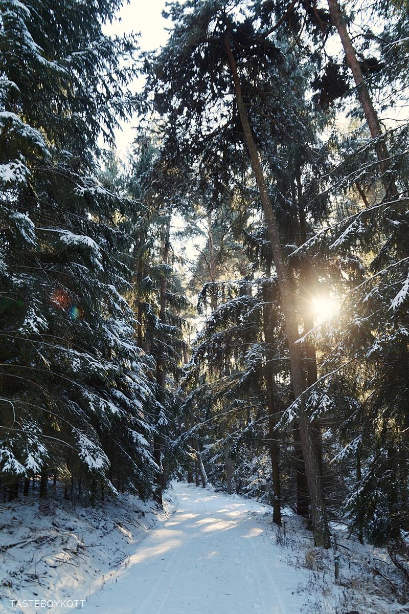 Sunny snowy winter walk in the forest | Tasteboykott