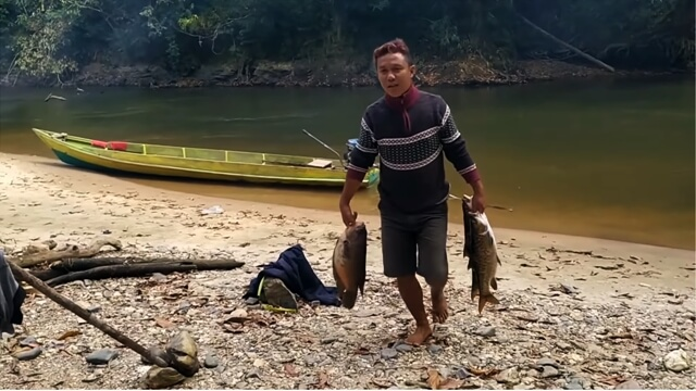 teknologi dayak membuat para-para untuk membakar ikan