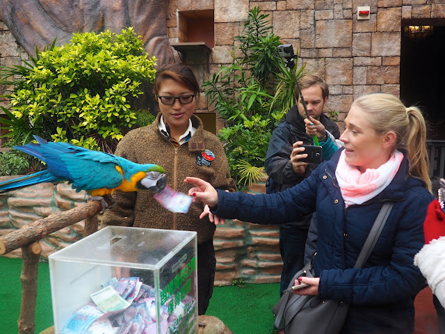 Parrot taking money donation at the Emperors of the Sky bird show at Ocean Park, Hong Kong