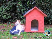 Cachorro de Can de Palleiro junto a una caseta para perros