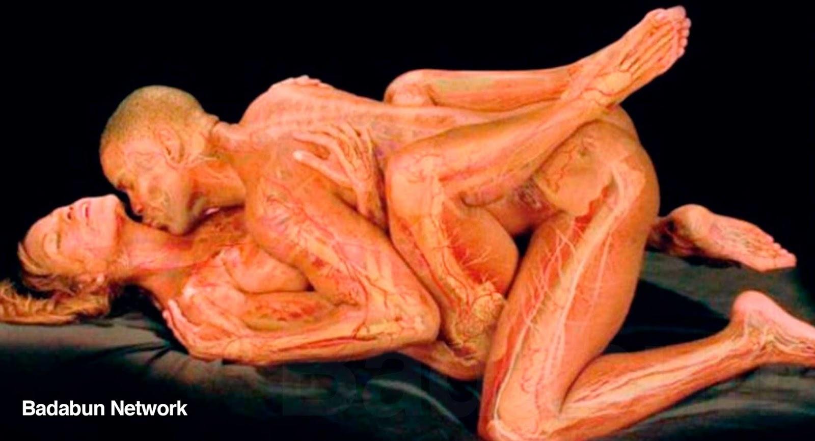 Asombroso Dentro Del Cuerpo Humano Femenino Imágenes - Anatomía de ...