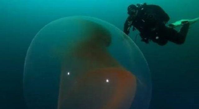 Giant 'alien-like' squid egg in underwater bubble found by divers in Arctic Ocean  Alien-like-squid%2Begg-%2Bunderwater-%2Bbubble