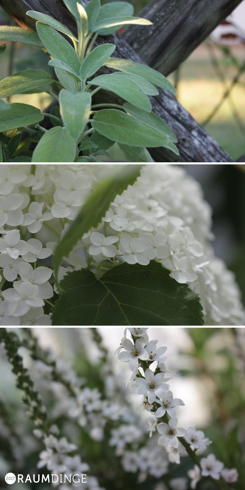 weiße Blumen, Stauden